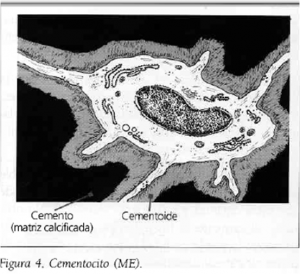 cementocito